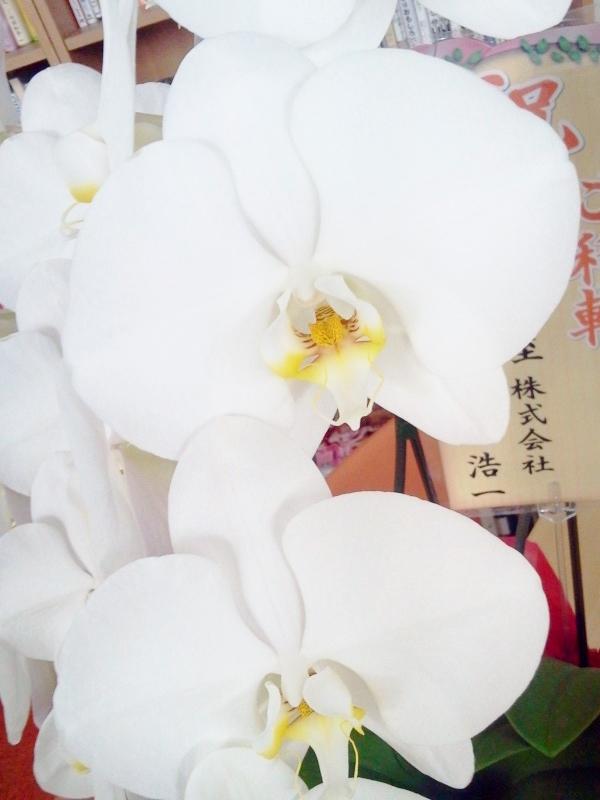 キラキラと張りのある花弁
