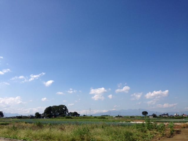 ネギ畑の広がる大地