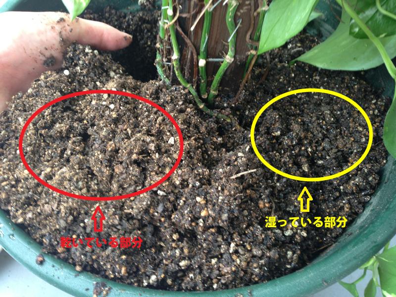 観葉植物診断3